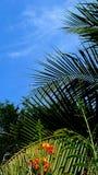 Coconutleaves Royaltyfria Bilder