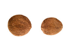 Coconuts. Isolated on the white background Stock Image