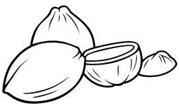 Coconuts. Black and White Cartoon illustration, Vector Stock Photos