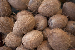 Coconuts. That have been stalked on farm stand Stock Photography