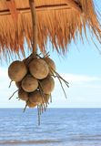 Coconuts. With blue sky and sea background Stock Image