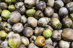 Coconuts Stock Photography