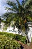 Coconuts. Latin name cocos nucifera Stock Photos