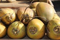 coconuts Fotografia Stock Libera da Diritti