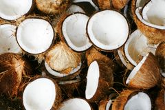 Free Coconuts Stock Image - 47888701