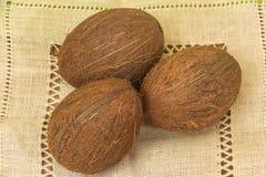 coconuts Fotografia Stock