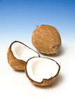 Coconuts. A whole coconut and an open one, on blue & white studio background Royalty Free Stock Photos