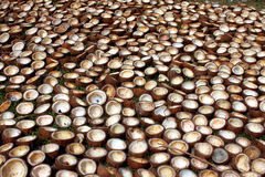 Coconuts Background. A background of many cut coconuts left for drying in a farm Stock Photo