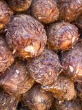 Coconuts background. Coconuts from India. Coconuts from India, good harvest, Kerala. Coconuts background. Cultivation of fruit Royalty Free Stock Image