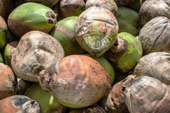 Coconuts background Stock Photography