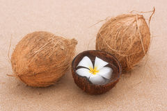 Coconuts on the background of  sandy beach. Royalty Free Stock Photography