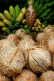 Coconuts and bananas. Coconut and bananas in an indian market Royalty Free Stock Photography