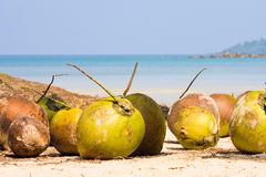 Coconuts on the beach Stock Photo