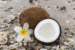 Coconuts on the beach Royalty Free Stock Image