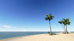Coconuts on the beach. Stock Images