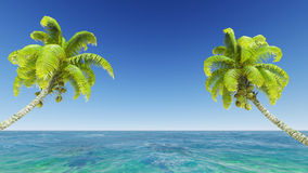 Coconuts on the beach. Royalty Free Stock Photos