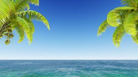 Coconuts on the beach. Royalty Free Stock Photo