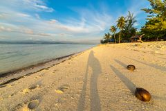 Coconuts on beach at sunset Stock Photography