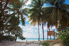 Coconuts on the beach Royalty Free Stock Photography