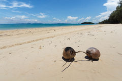 Coconuts on the beach. Two coconuts stay alone on the beach Stock Image