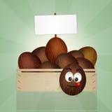 Coconuts box Stock Image