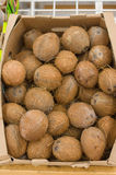 Coconuts in boxes in supermarket Royalty Free Stock Photography
