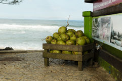 Coconuts in Brazil. Coconuts by the beach in brazil Royalty Free Stock Photos