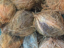 Coconuts. A  Brown Coconuts shell in market Royalty Free Stock Images