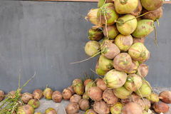 Coconuts with bunches Royalty Free Stock Photo