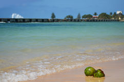 Coconuts at caribbean seaside. Coconuts fallen from the palm tree and landed at the seaside, near a little wave, in Playa Girón, Cuba Stock Image