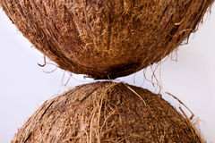 Coconuts - close-up Royalty Free Stock Images