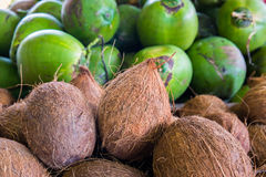 Coconuts. Close up view of peeled coconuts with unpeeled coconuts in the background Stock Photography