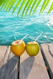 Coconuts cocktail palm tree leaf in Caribbean. Tropical sea Royalty Free Stock Photos