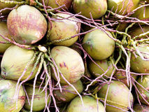 The coconuts Stock Images
