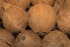 Coconuts. The coconut tree is a member of the family Arecaceae and the only species of the genus Cocos. The term coconut can refer to the whole coconut palm or Stock Photography