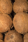 Coconuts. The coconut tree is a member of the family Arecaceae and the only species of the genus Cocos. The term coconut can refer to the whole coconut palm or Royalty Free Stock Photography