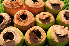 Coconuts stock images