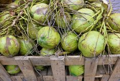 Coconuts in a crate. Fresh coconuts in a wood crate selling in market Royalty Free Stock Photography