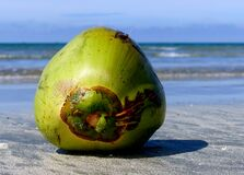 Coconuts day at the beach. Royalty Free Stock Photography