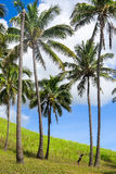 Coconuts in Easter Island, Chile Stock Photography