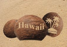 Coconuts in the sand. Coconuts with an engraving in the sand Stock Images