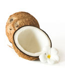 Coconuts and flower royalty free stock image