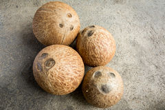 Coconuts. Stock Images