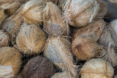Coconuts. Fresh coconuts on the market Royalty Free Stock Image