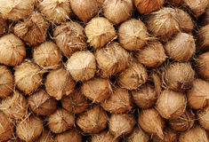 Coconuts Royalty Free Stock Photo