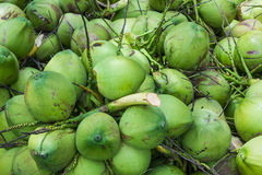 Coconuts fruit Stock Image