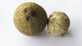 Coconuts Fruit Stock Photo