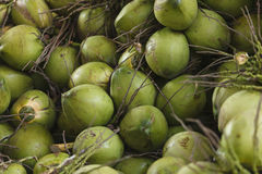 The coconuts Royalty Free Stock Photography