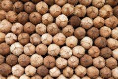 Coconuts heap. Food market, India Royalty Free Stock Image