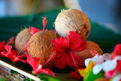 Coconuts and hibiscus flowers Stock Images